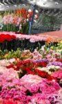 Avviso – Visita all'Euroflora