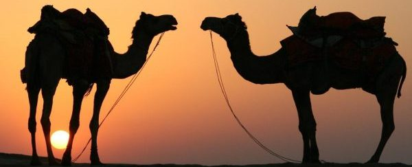 cammello-e-dromedario